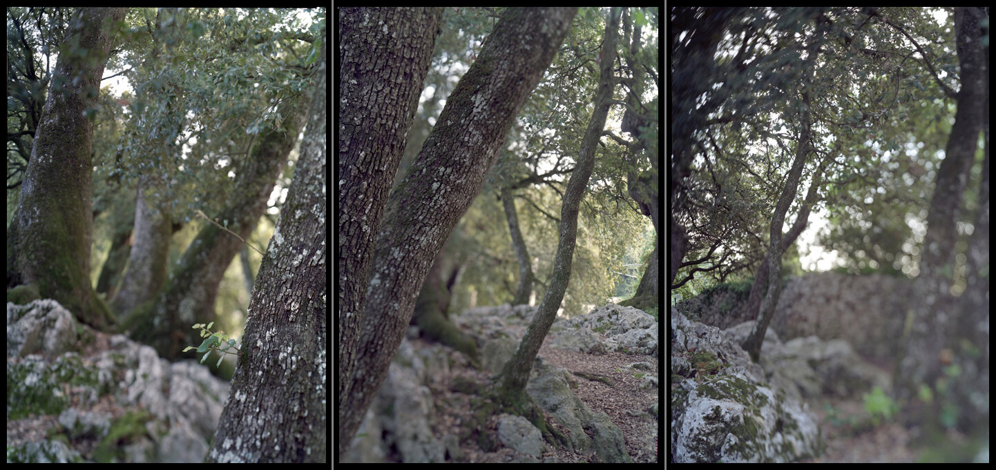 SACRED leaning trees_frames.jpg