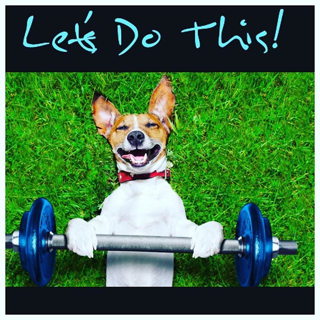 😀Can having a pet help you stay in shape and #loseweịght ?🎉🎉Click the link in my bio to see how they can! 🎉🎉 @petsaddlife #weightloss #pets #funnypets #petsaddlife