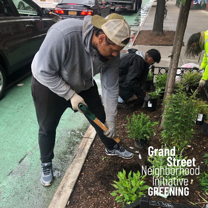 Greening - We partner with the Horticultural Society of NY to plant Brooklyn native perennials inside our tree beds throughout the district to beautify our neighborhood. With funding from Council Member Reynoso we also installed 22 additional tree guards last summer to protect those plantings and keep our trees safe + air clean.