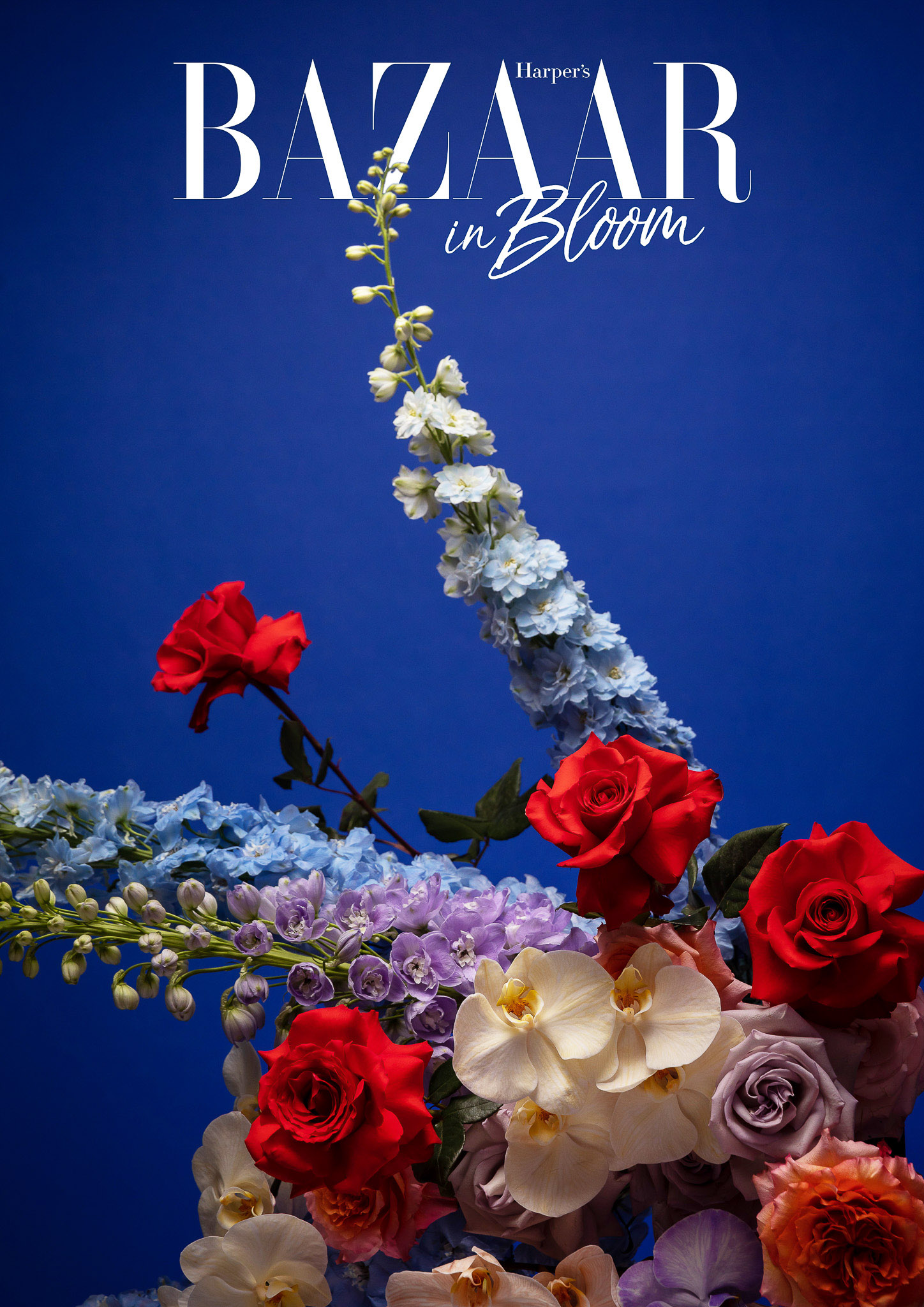 Harpers Bazaar in Bloom