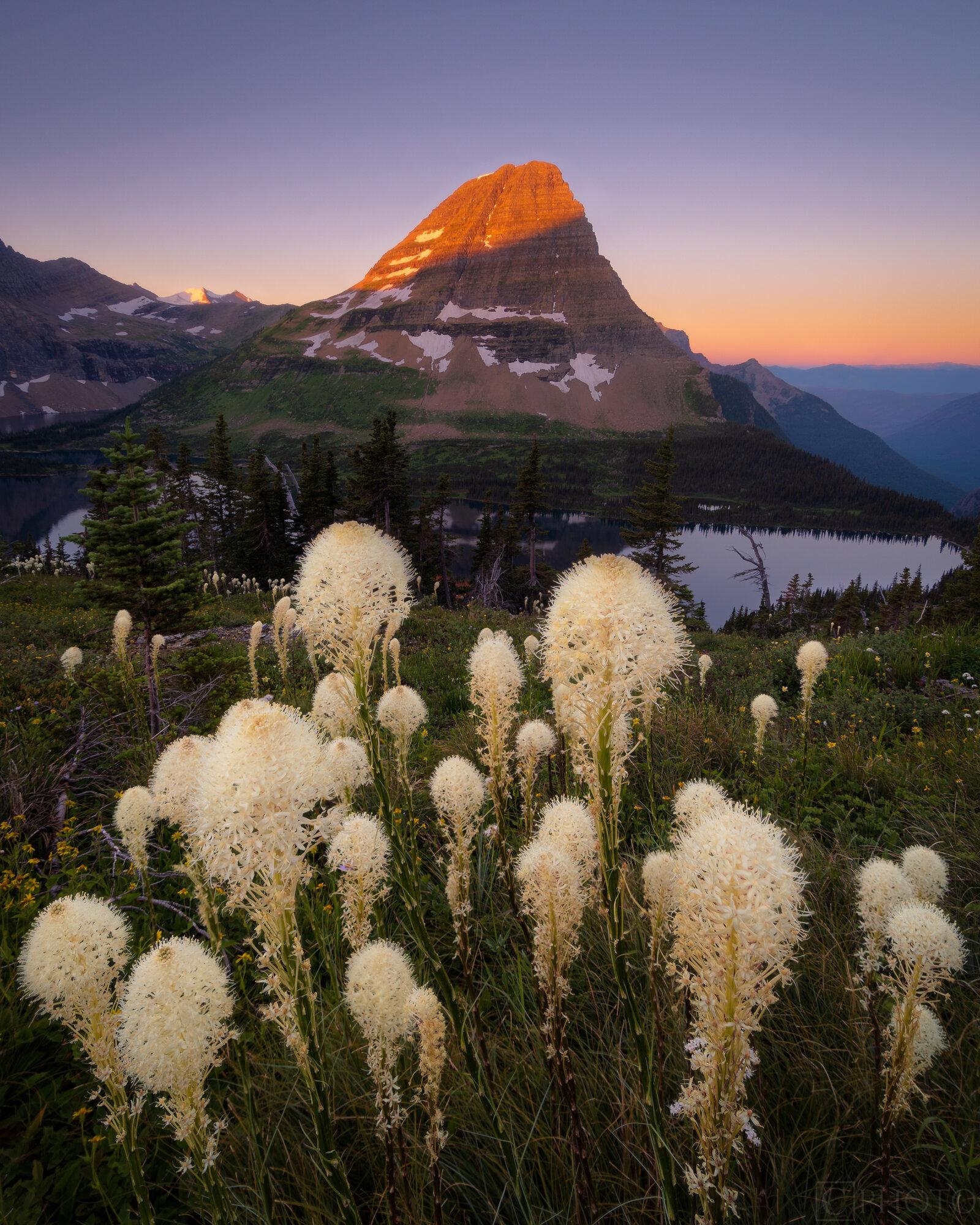 Beargrass at Hidden Lake Overlook