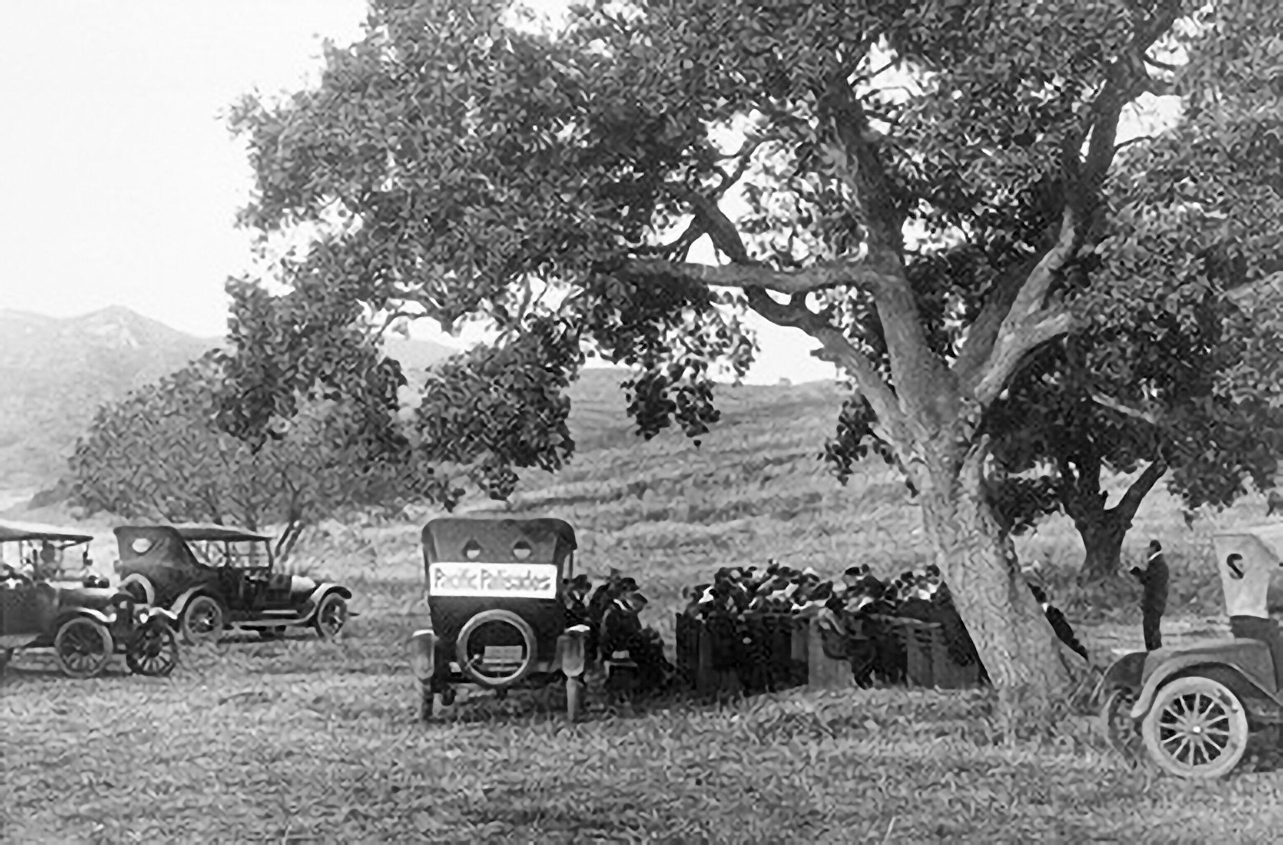 Founders Oak 1922