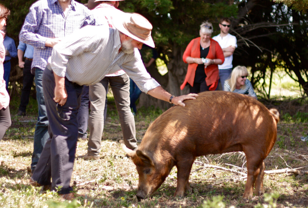 patting pigs.jpg