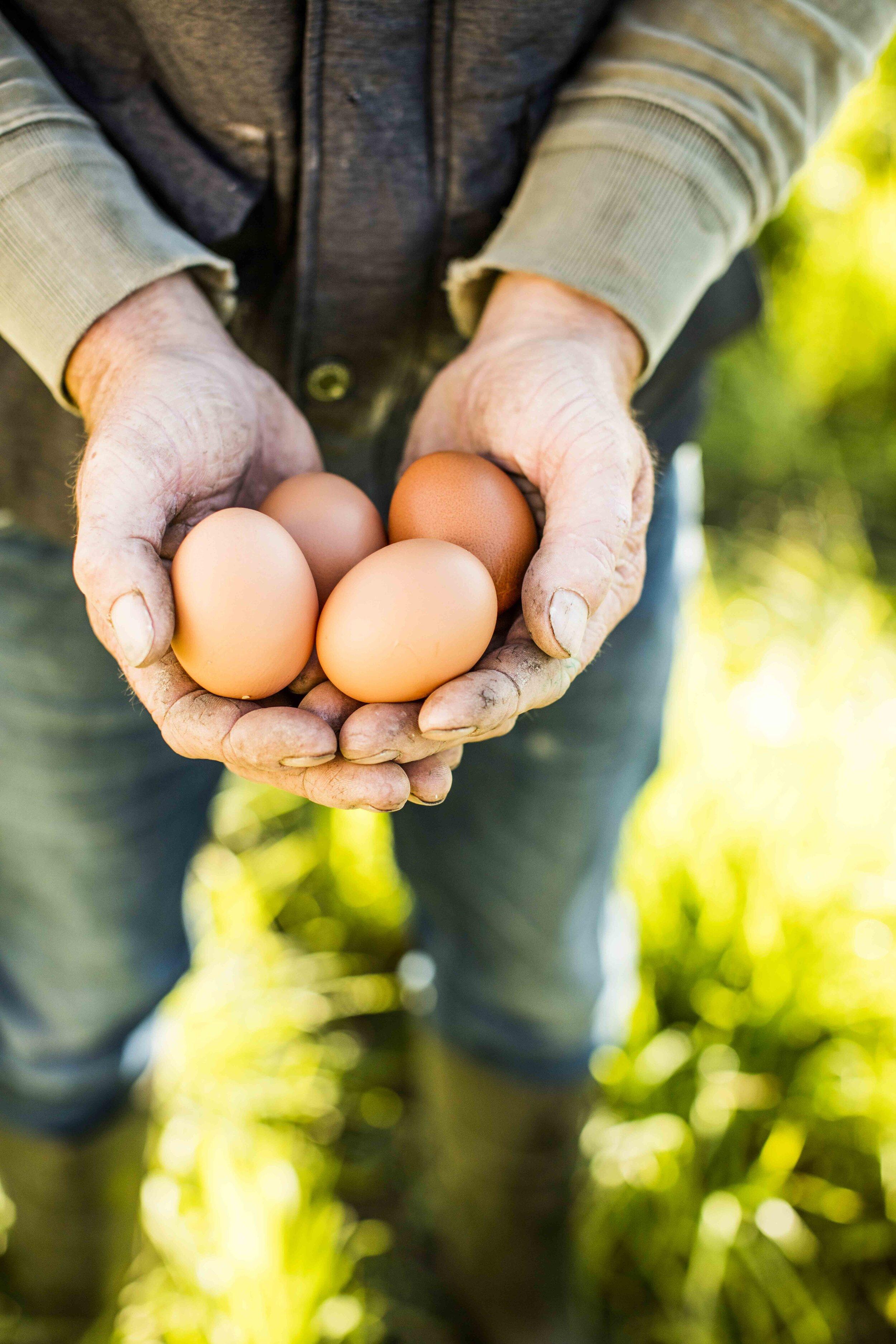 eggs in hand.JPG