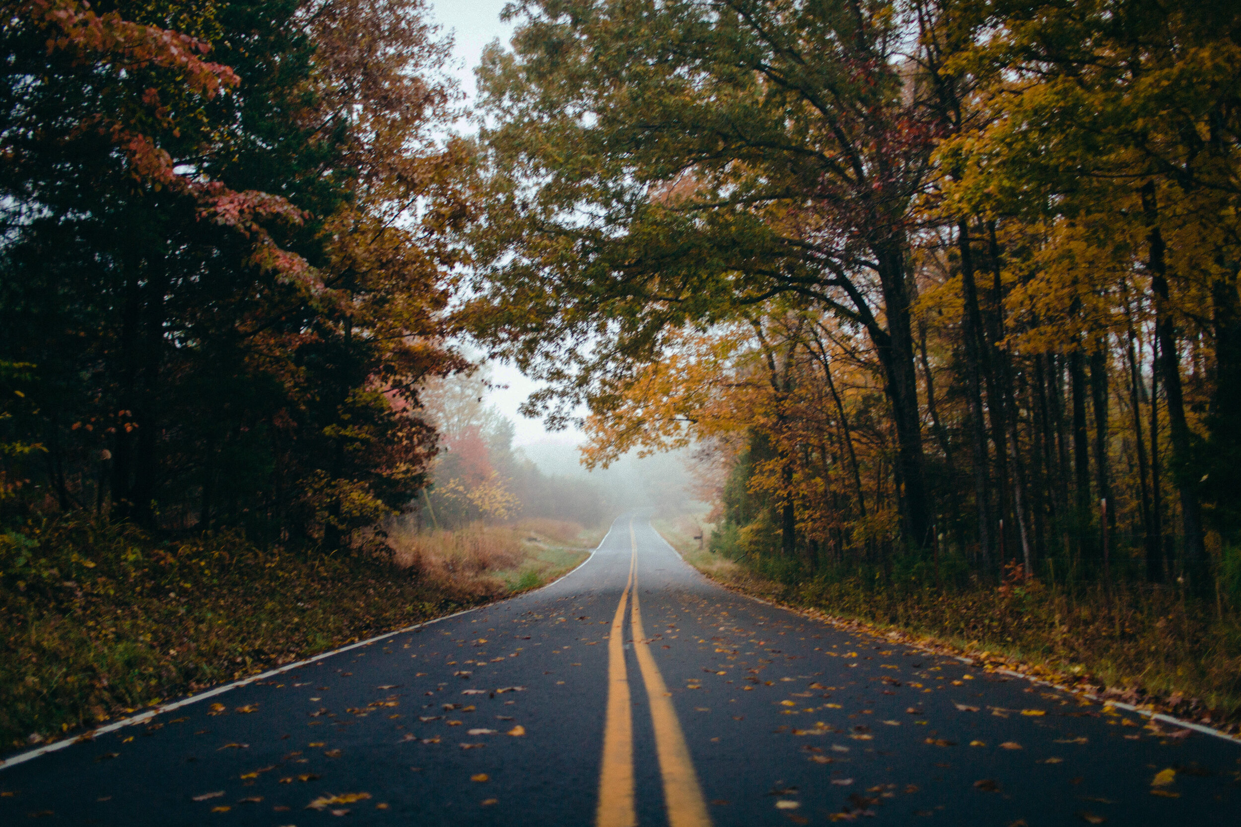 Plan your Fall road trip with this online leaf tracker