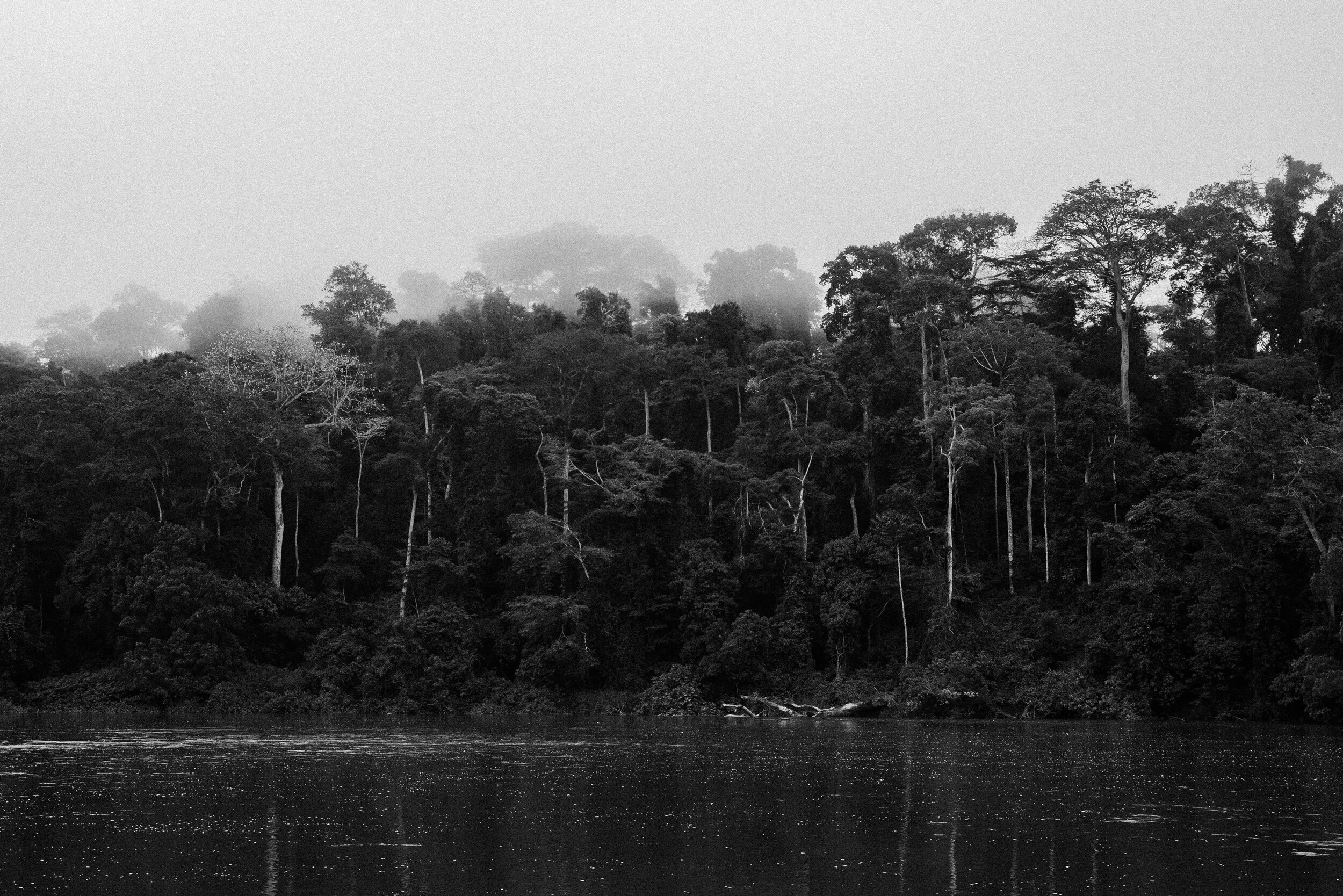 Congolese Equatorial Rainforest, Boumba River, Cameroon -  Tito West, 2016