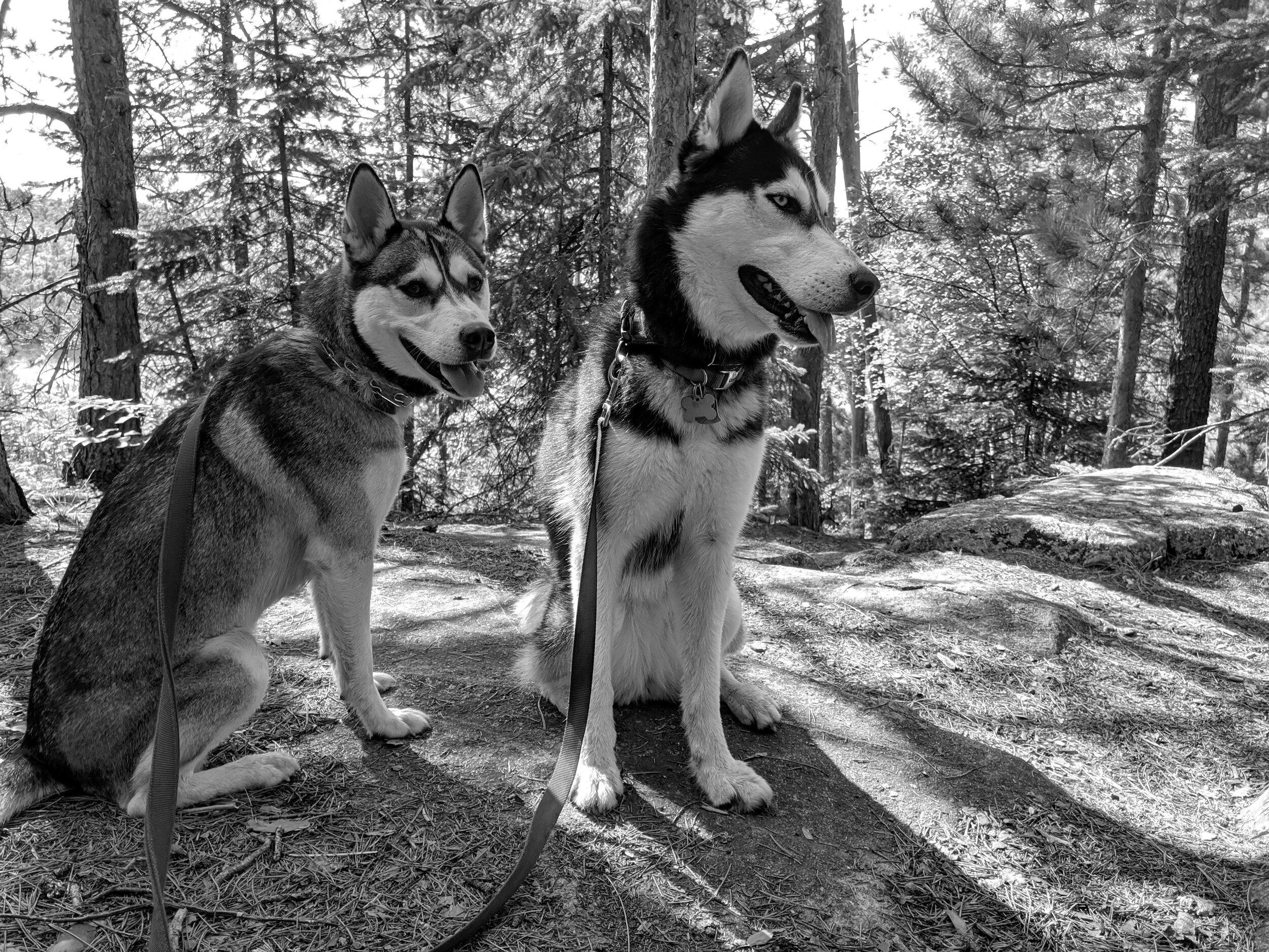 SiberianSoapCo-Tundra&Taiga