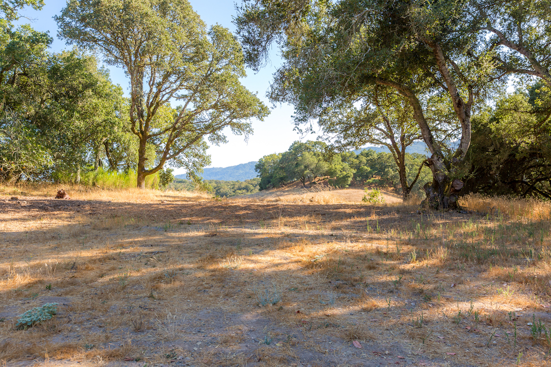 Sonoma County land for sale 9.jpg