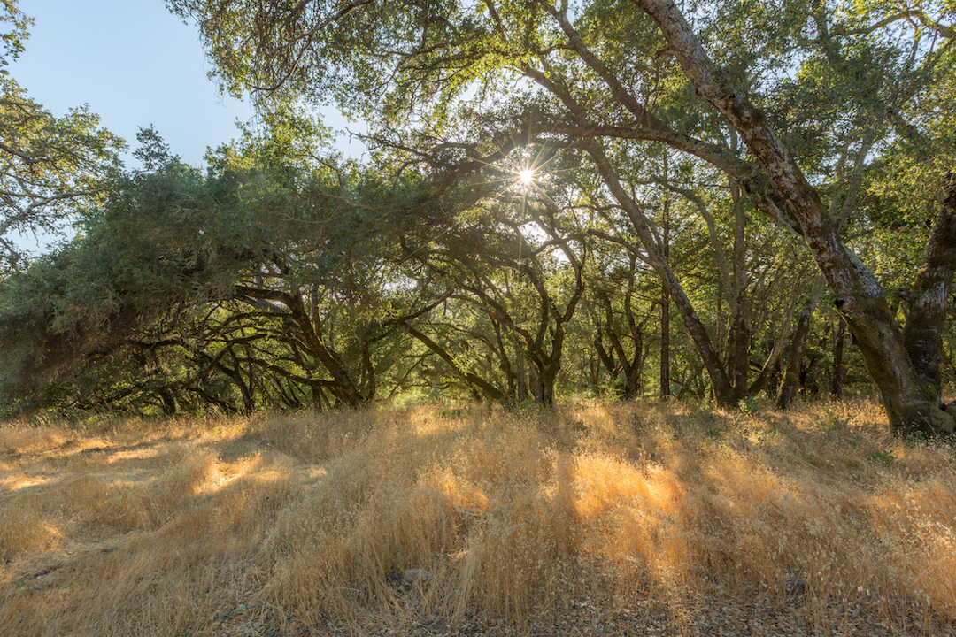 Sonoma County land for sale 24.jpg