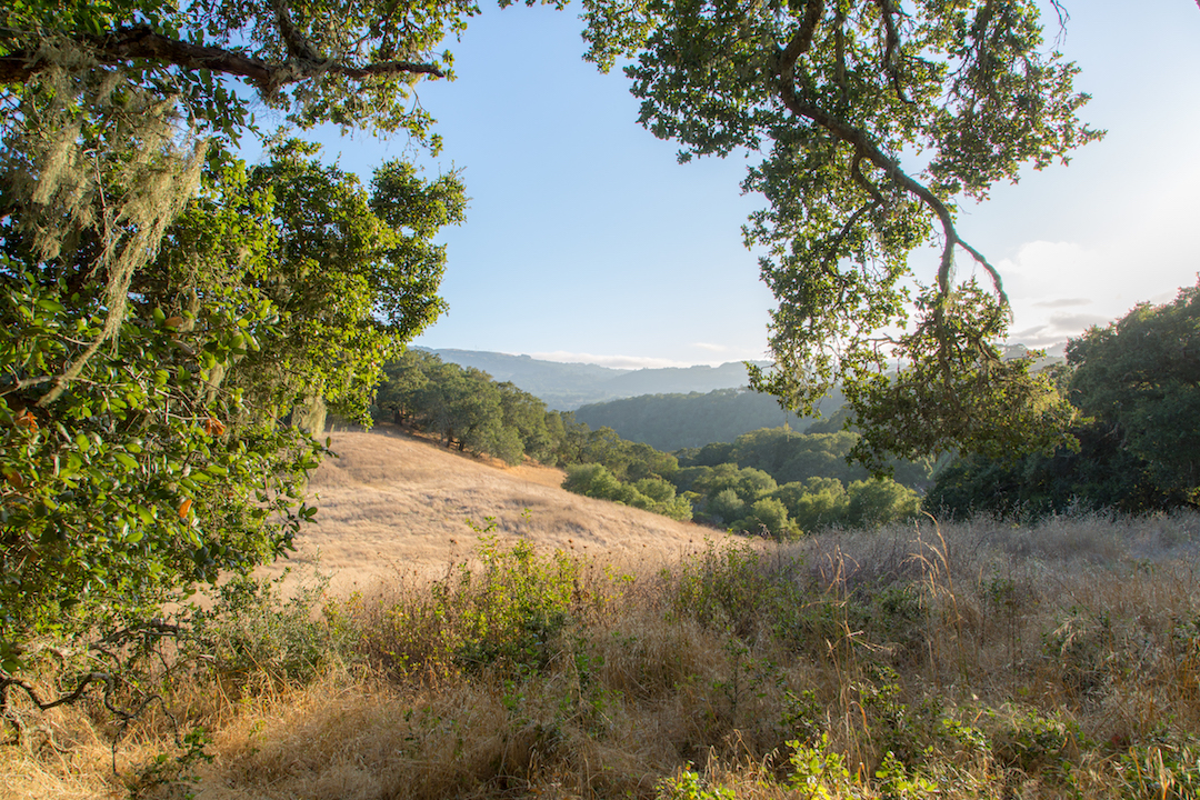Sonoma County land for sale 25.jpg