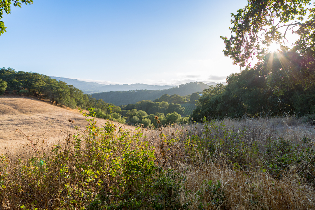 Sonoma County land for sale 27.jpg