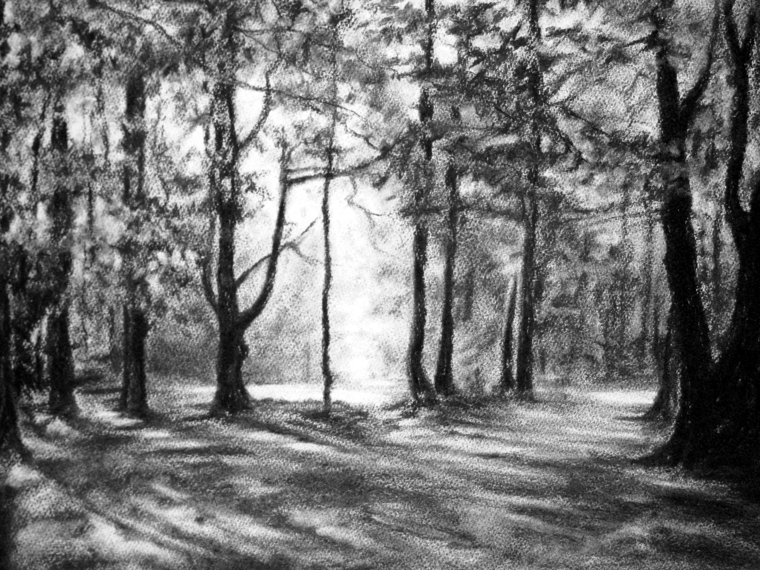 Fyning Woods, charcoal