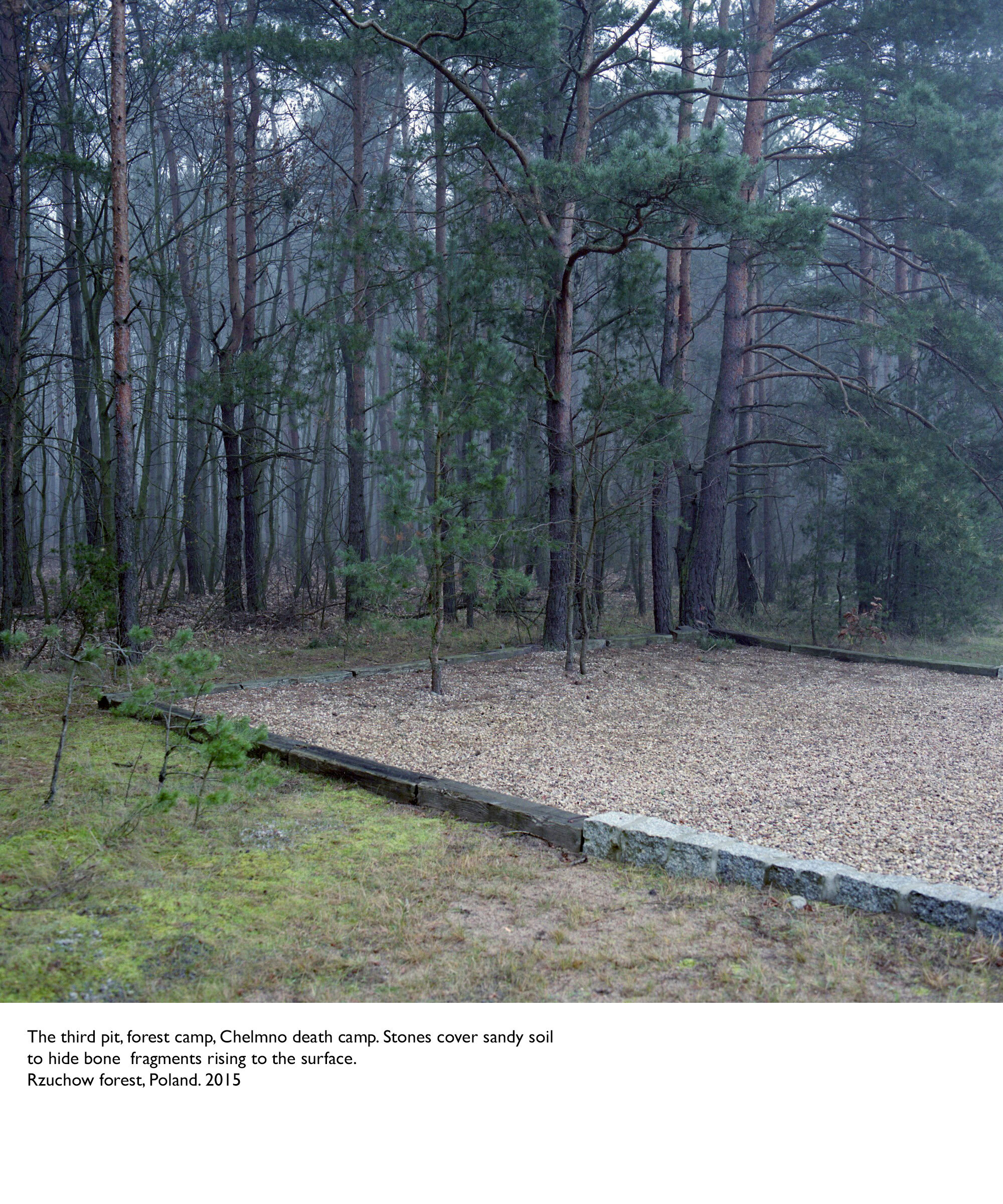The third pit, forest camp, Chelmno death camp. Stones cover sandy soil to hide bone fragments rising to the surface. Rzuchow forest, Poland. 2015