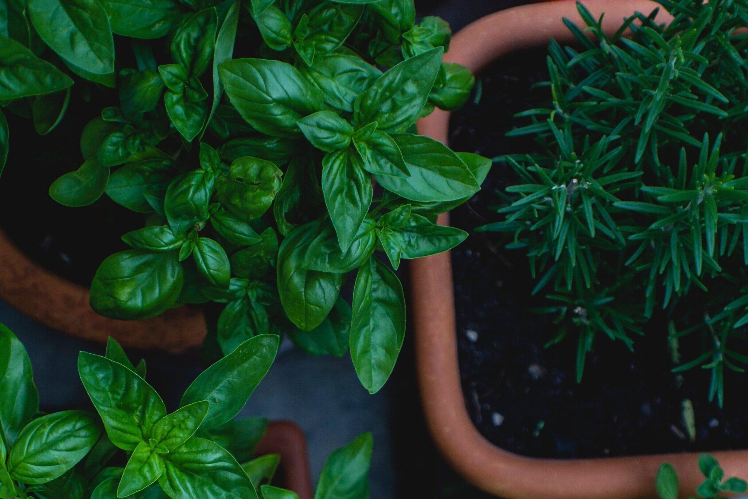 Indoor Gardening Workshops - Gardening is the ultimate wellness activity, we teach you how to grow plants in your home.