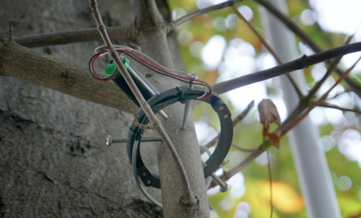 """- In the garden of the Fondation Cartier pour l'art contemporain 12 sensors connected to 2 trees.Where real time tree """"communication"""" , extensive photosynthesis calculations and C02 fluctuations"""