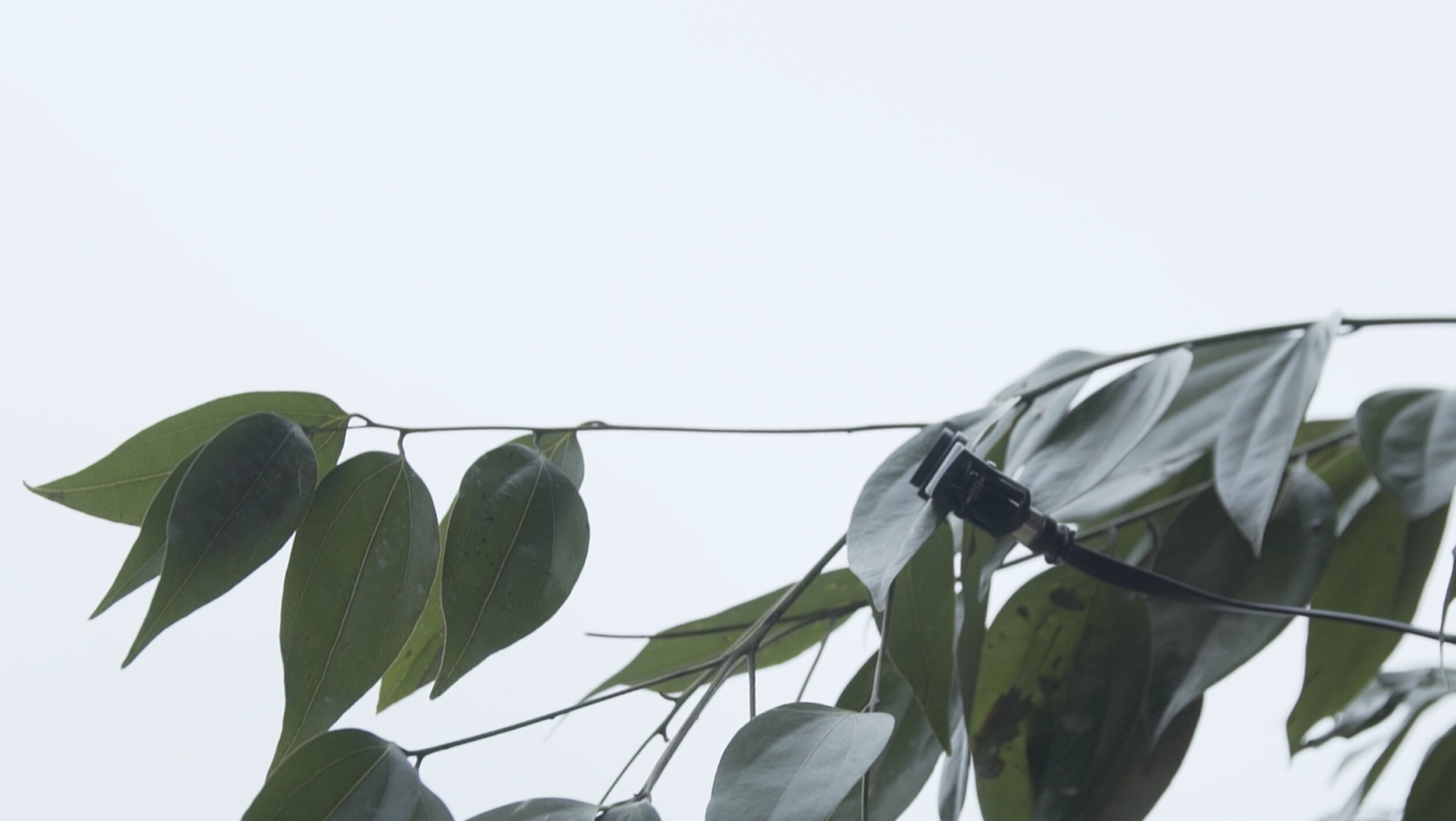 - By connecting 12 sensors to a living tree in one of the most polluted cities in the world; Chengdu, China,