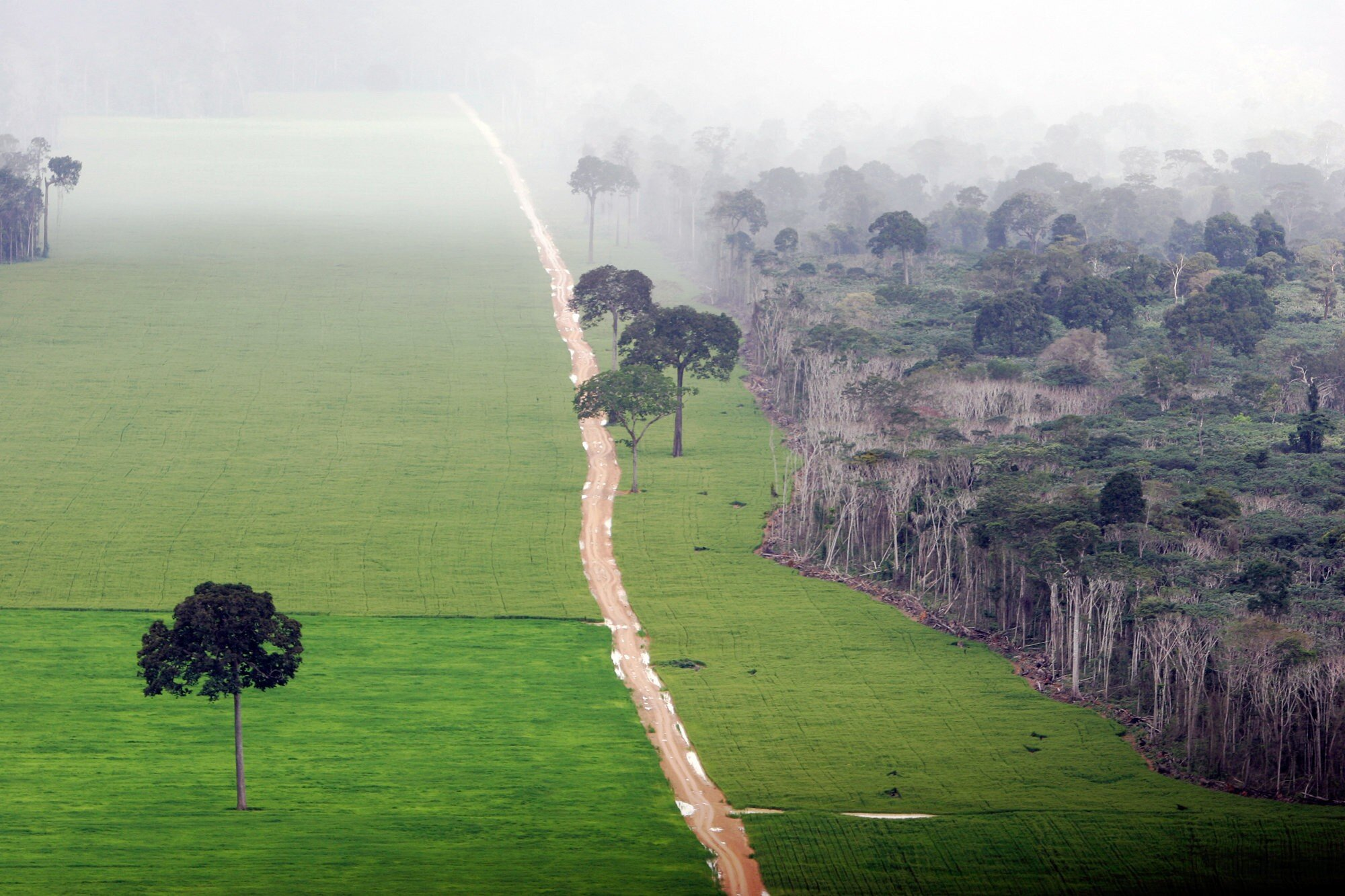- There is 15.000 m2 of rainforest disappearing every second in places no one is watching.