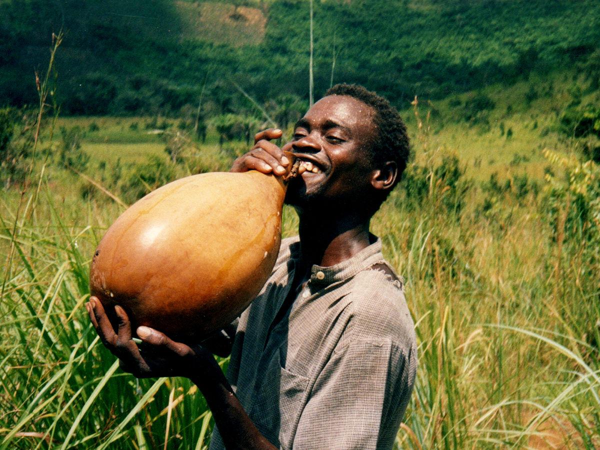 refreshing palm wine |  Nick Hobgoo d | wikimedia commons