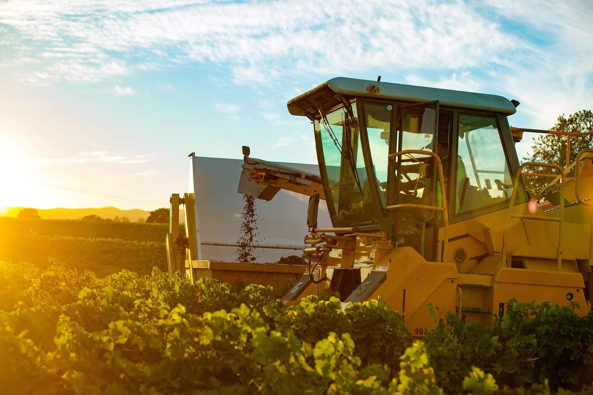 Agriculture - Sustainable agricultural operations to protect our environment and improve wine quality