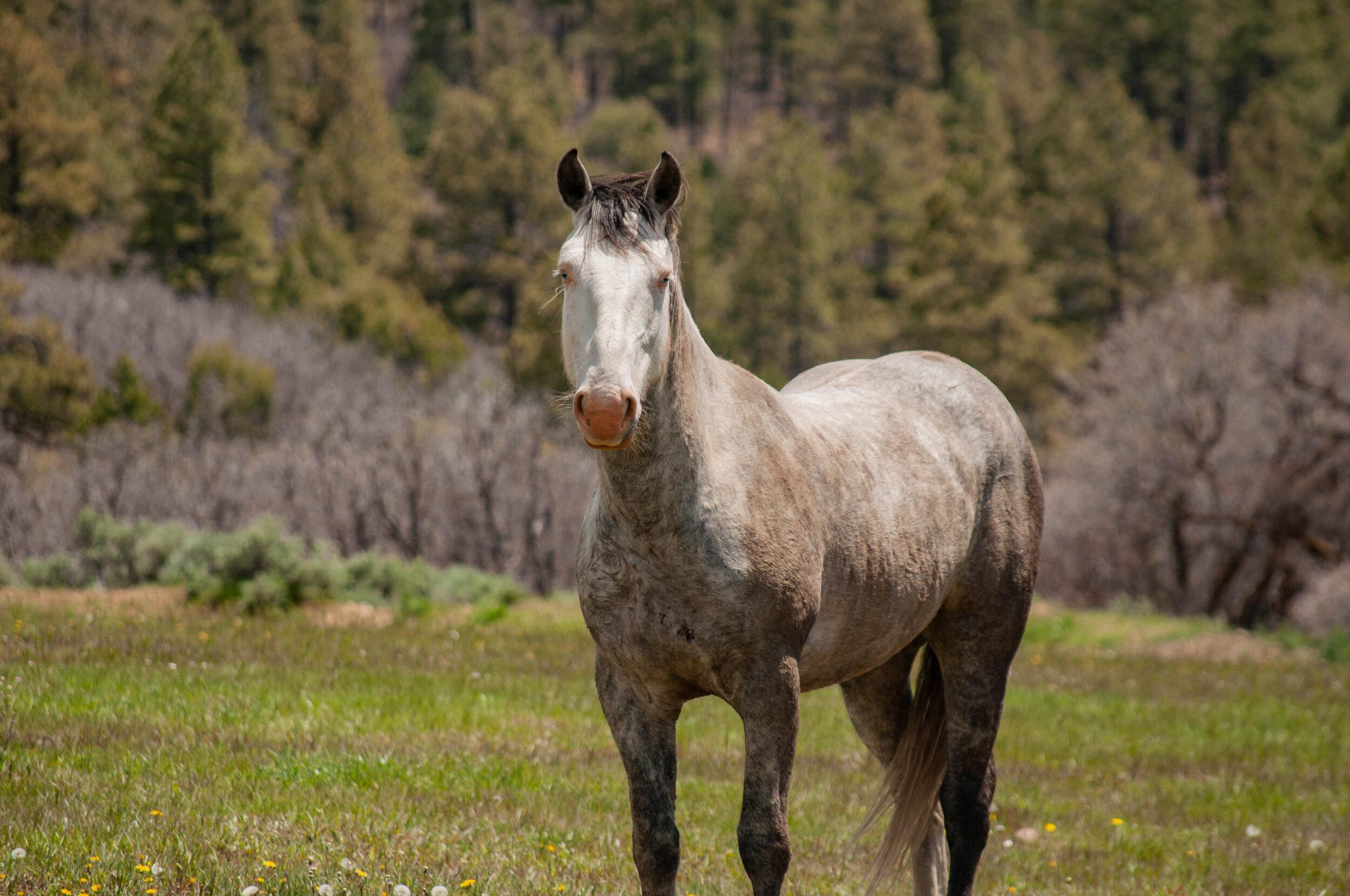 Wild Horses Thriving on Wild Land