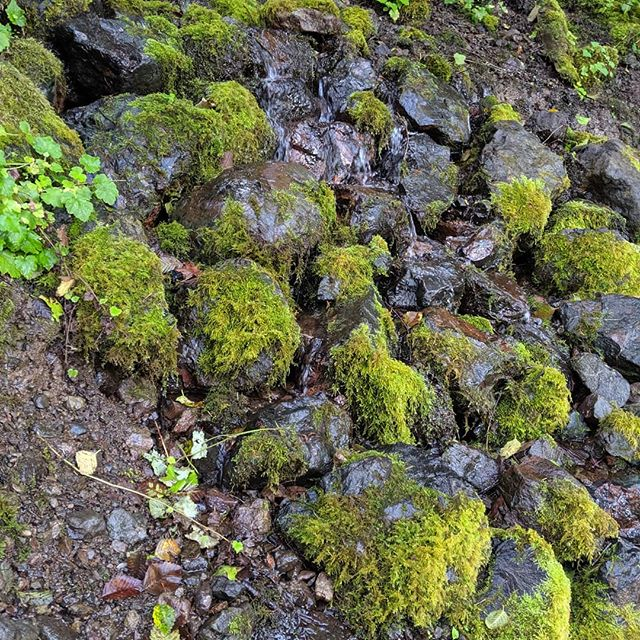 #olympic #moss #rocks #nature #unfiltered #pixel3 #water #stream #smileproductions  From our day at Lake Crescent shooting a video for Glenn Gilliam. What a great day!