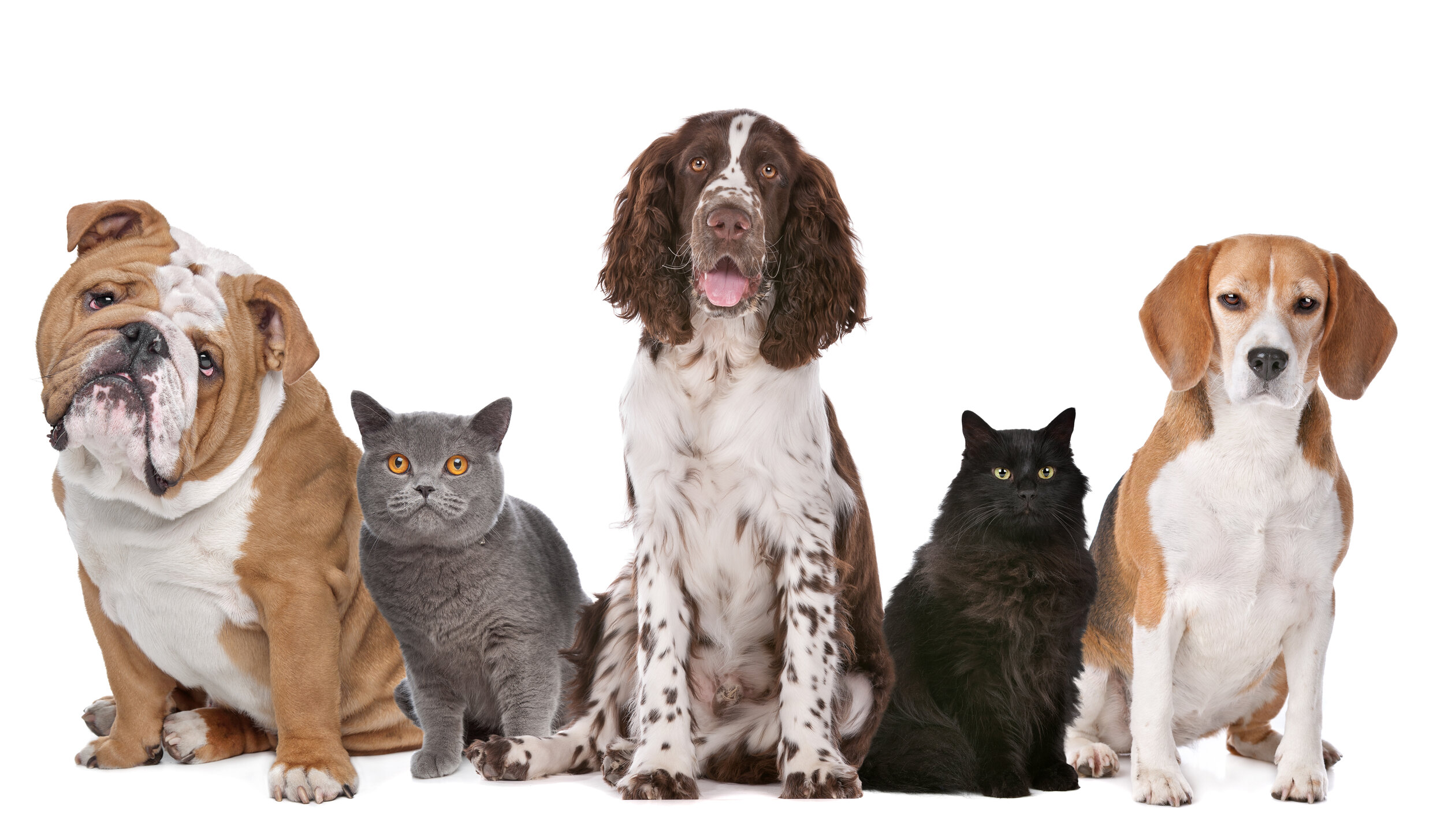 Canva - Group of cats and dogs.jpg