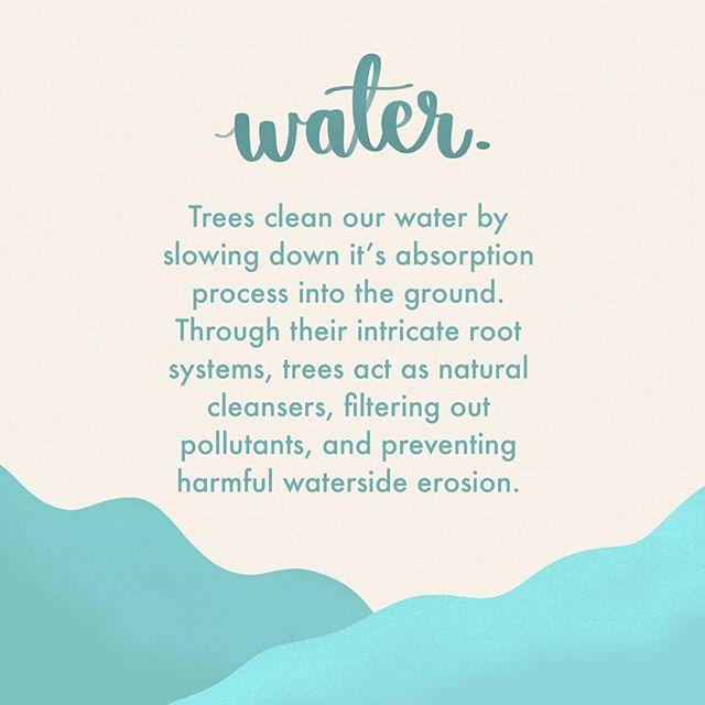 The benefits of tree planting! Reason 5... Plantingforpeace.org (link in bio)  #climatechange #bethechange #plantingforpeace #planttrees #globalwarming #peace #environment #change #responsibility #sustainability #treevolution #reforestation #kenton #stanmore #edgware #london