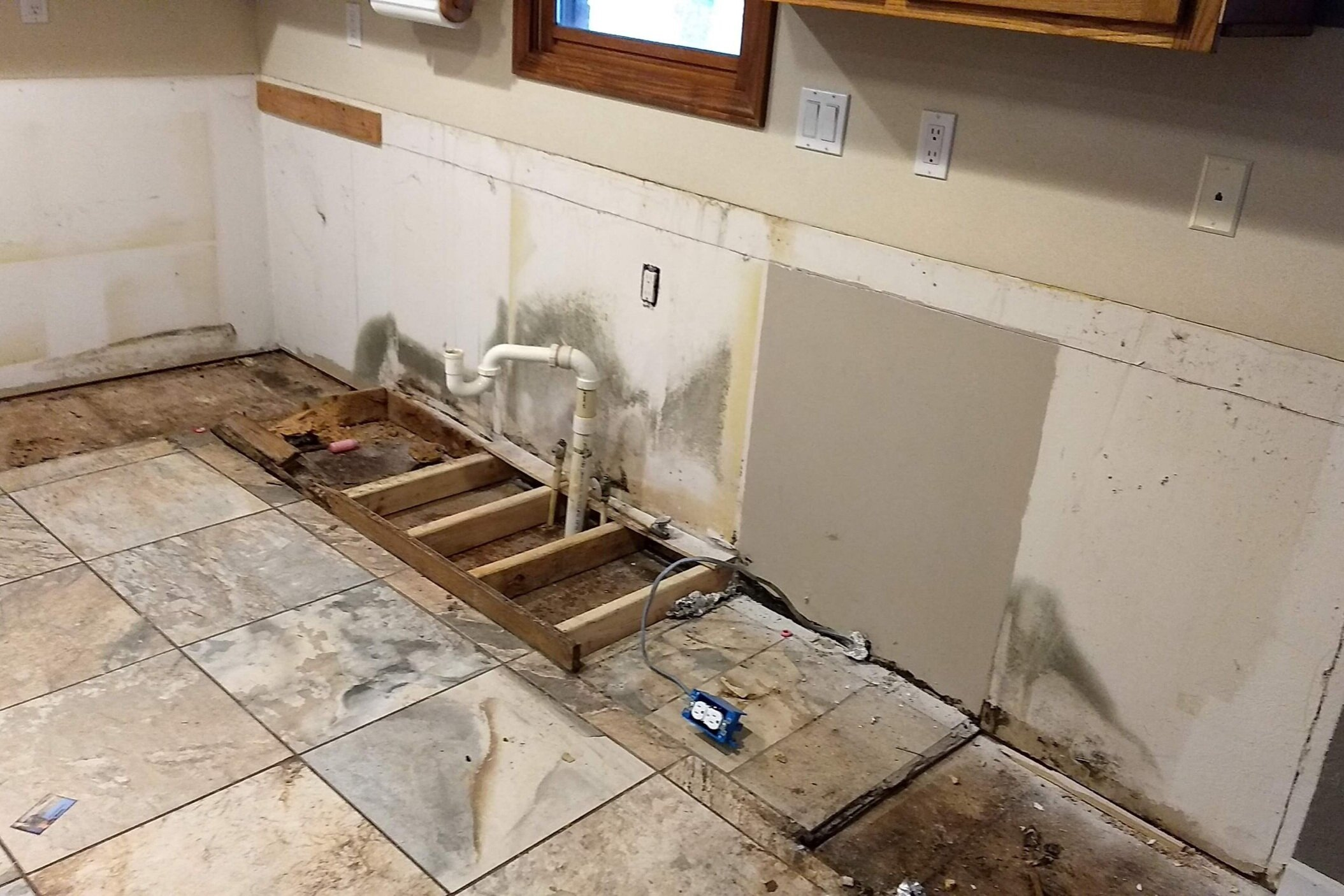 High Point Mold Removal