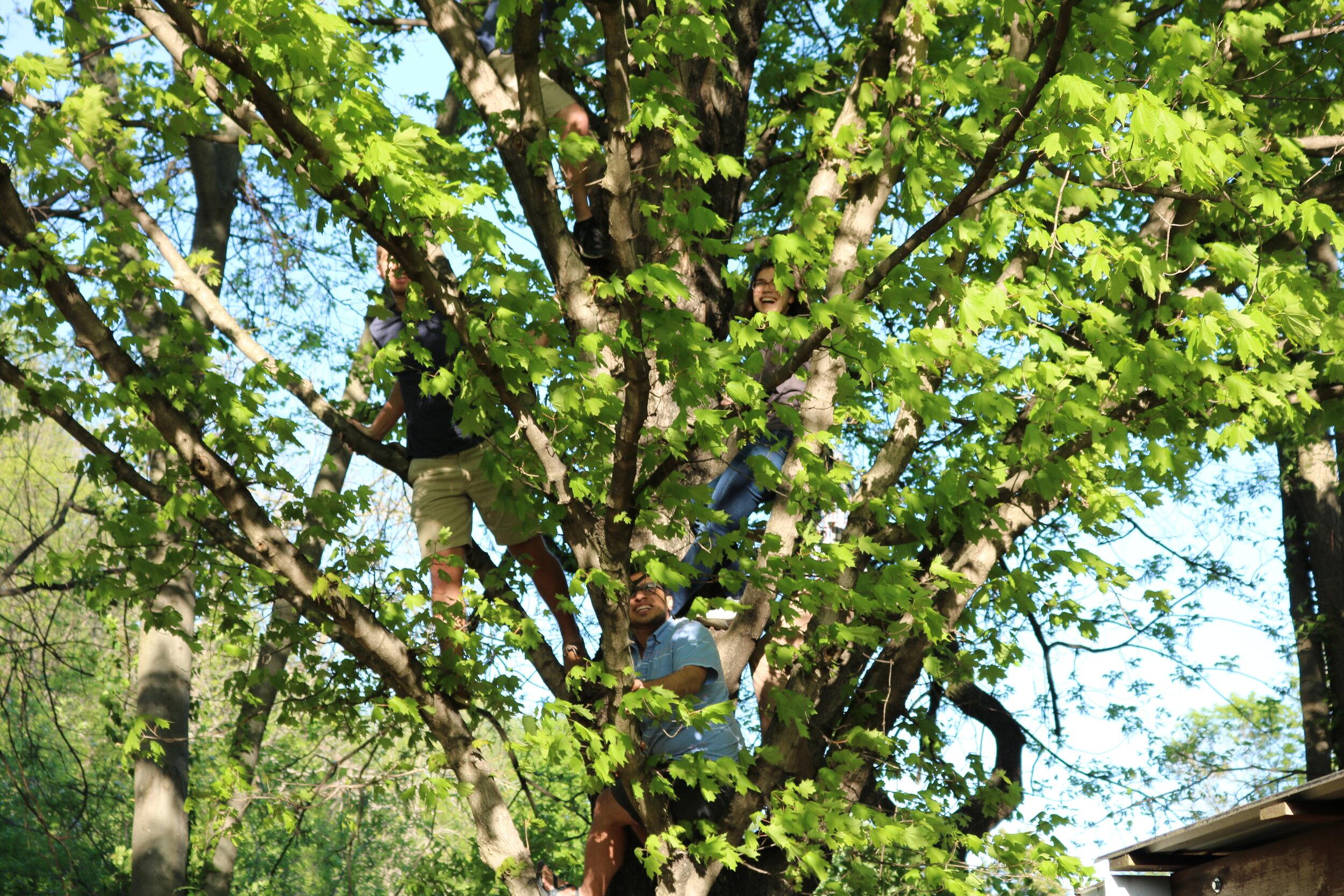 Tree-climbing, a favorite pastime among SyBBUREites.