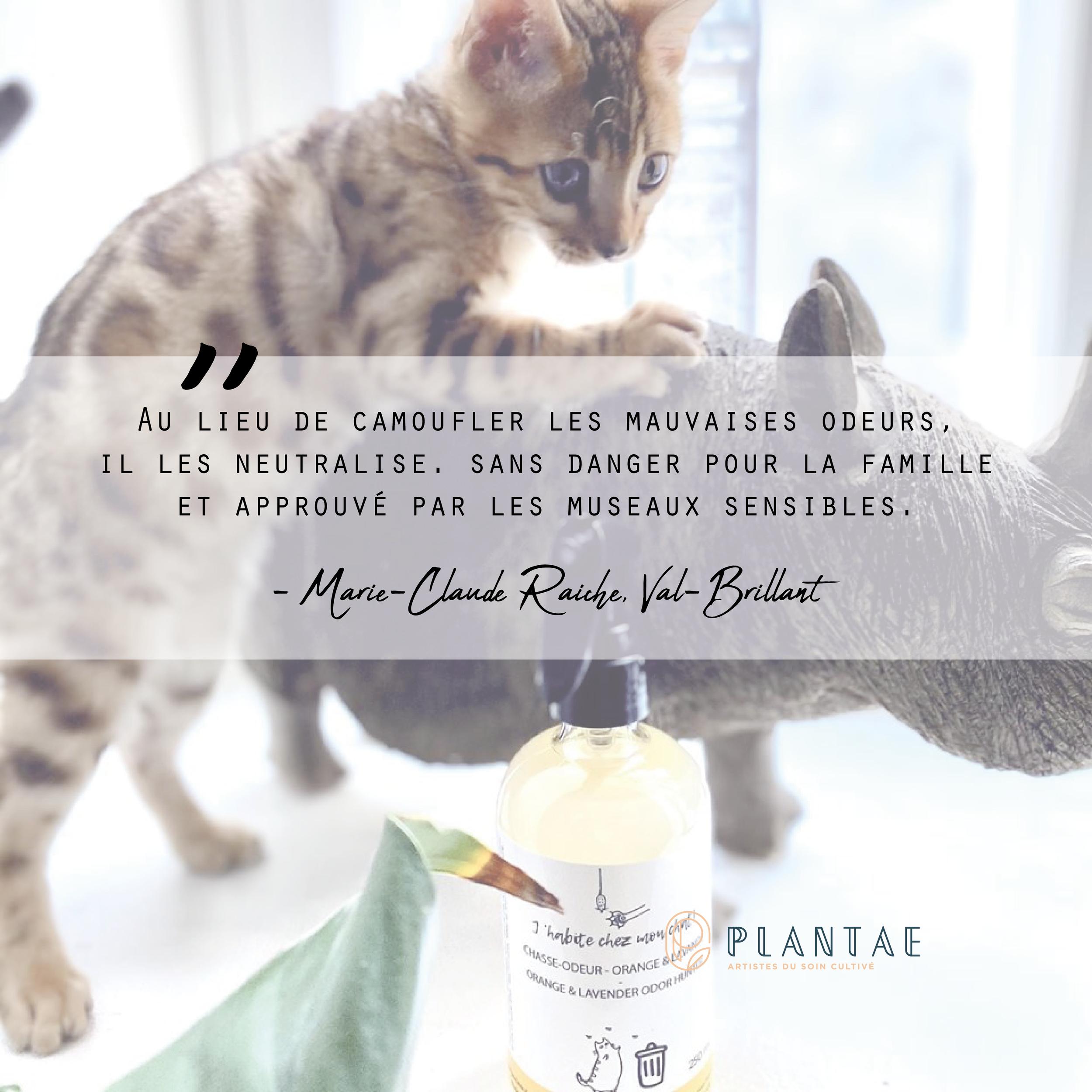 Savon Sans Odeur Pour La Chasse boutique — plantae