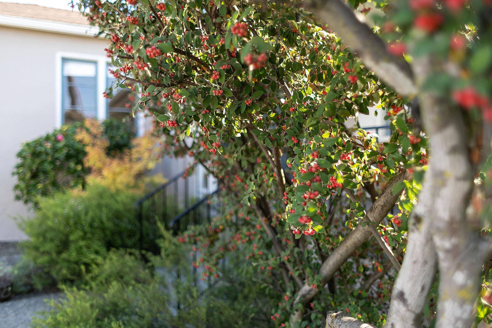 38 berries.jpg