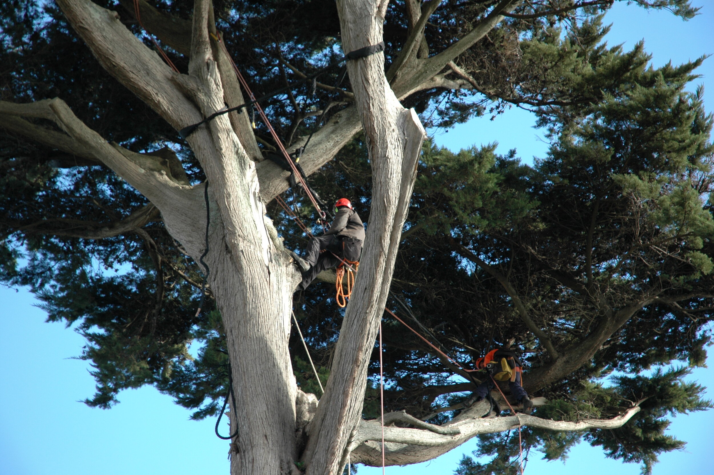 Expert Advice - We specialise in all aspects of tree work and can undertake any services required, offering the best advice available