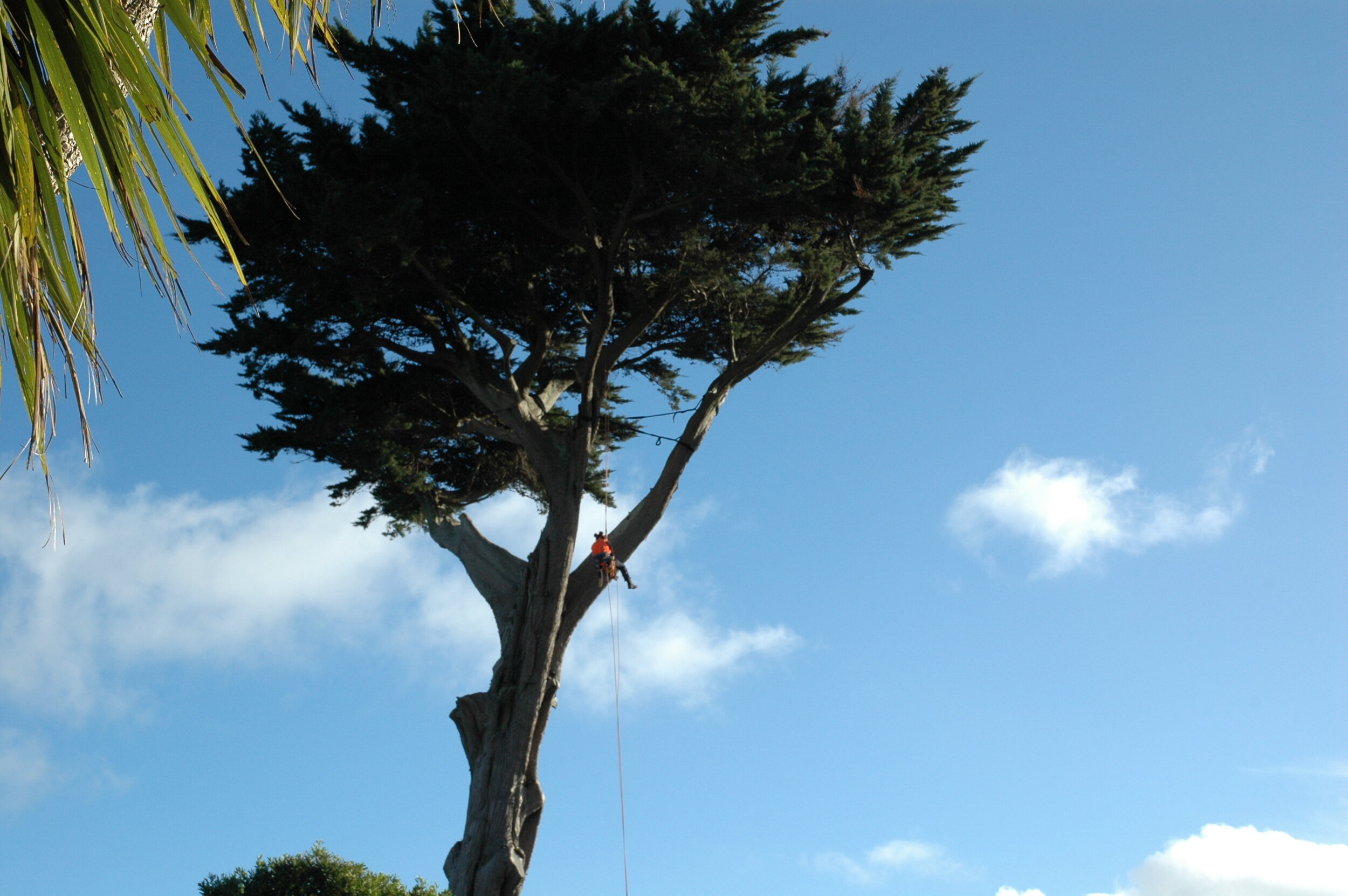 The highest standards - Our crew continuously trains and maintains the best possible arboricultural standards using well maintained and modern equipment.