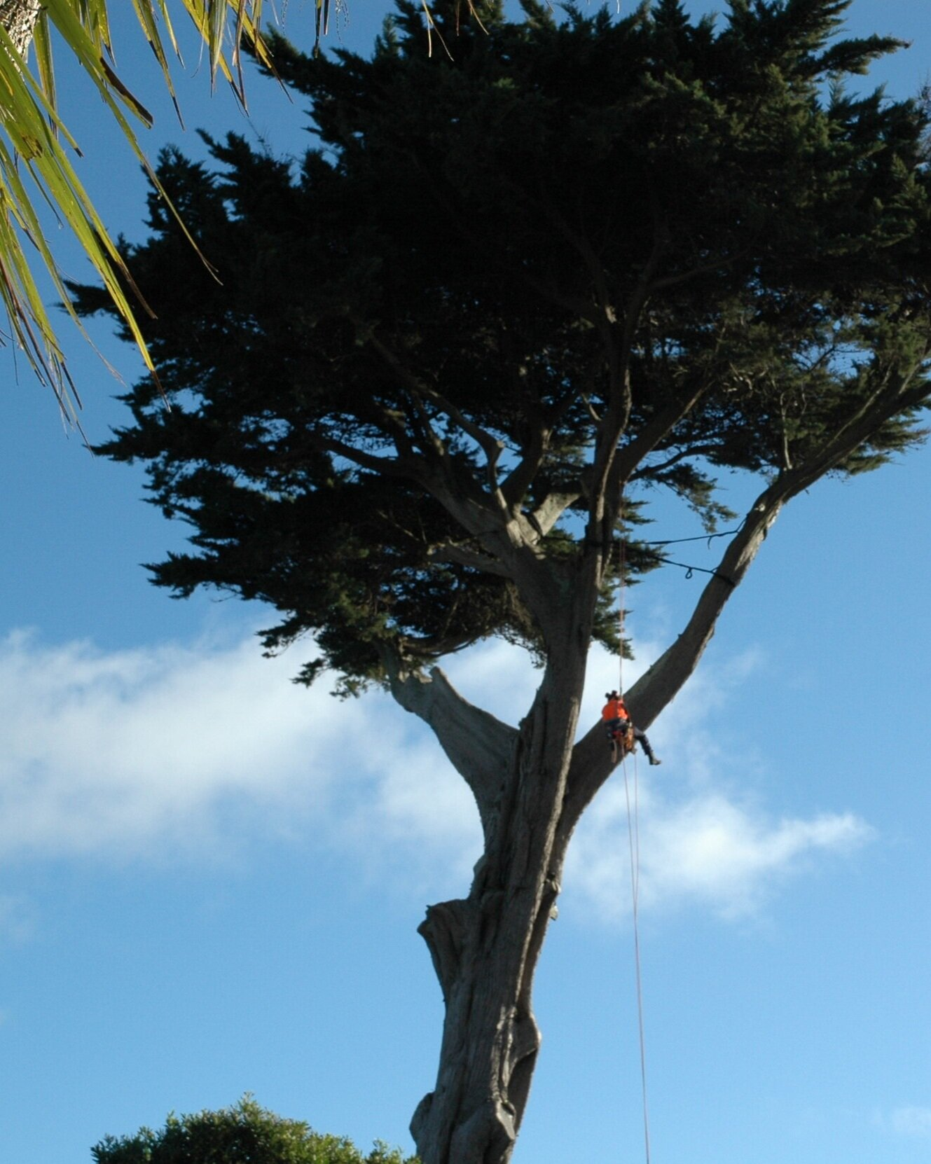 About Us - We are a locally owned and operated company and we pride ourselves in  our ability to offer advice, conduct evaluations, & complete our  works within a reasonable timeframe and to the best arboricultural standards. We also pride ourselves in our ability to leave a clean &  tidy site with minimal environment impacts, behind us.Across the Wellington Region Coastal Tree Services Wellington Ltd can provide services such as tree removal & trimming (crown reduction, crown thinning, crown lifting and formative pruning), tree bracing / cabling, pruning, hedging & hedge trimming, stump grinding, clearing, chipping, mulching,  pesticide spraying and tree report services. We offer these services in  Wellington & the Kapiti Coast, including; Wellington, Lower Hutt,  Upper Hutt, Pukerua Bay, Paekakariki, Raumati, Paraparaumu, Otaihanga,  Waikanae, Peka Peka, Te Horo, Otaki, Manakau, Ohau, and Levin.Our crew continuously train & maintain the best possible  arboricultural standards using well-maintained & modern equipment  & are adept in tree works; from the largest job to the smallest job.Operating with a Qualified Arborist, you can  be assured that all work will be carried out the highest possible best  practice & safety standards, with the health of the tree or shrub  first & foremost, and minimal environmental impacts.With our free quote system you can be assured that we will offer the  best advice available, taking into account your requirements, the local  environment & the health of the surrounding area.You can also feel assured by the fact that the individual who comes  and gives you the quote, will be onsite to do the work. What this means  is that you can feel confident that you don't need to explain the works  once more and that any particular concerns you expressed will be taken  into consideration.