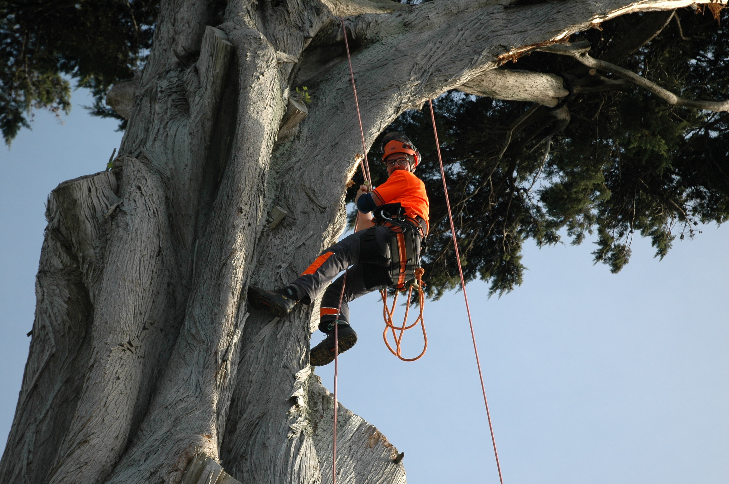 24hr Emergency Service & Insurance. - Coastal Tree Services Wellington Ltd are able to respond 24hrs a day, 7 days a week to emergency call-out tree work.Fully InsuredCoastal Tree Services Wellington Ltd carries $1,000,000.00 CFS Liability Insurance.Coastal Tree Services has full public liability insurance and operates to the New Zealand Health and Safety standards, following best practice guidelines. We are also Council approved for Health and Safety on site.