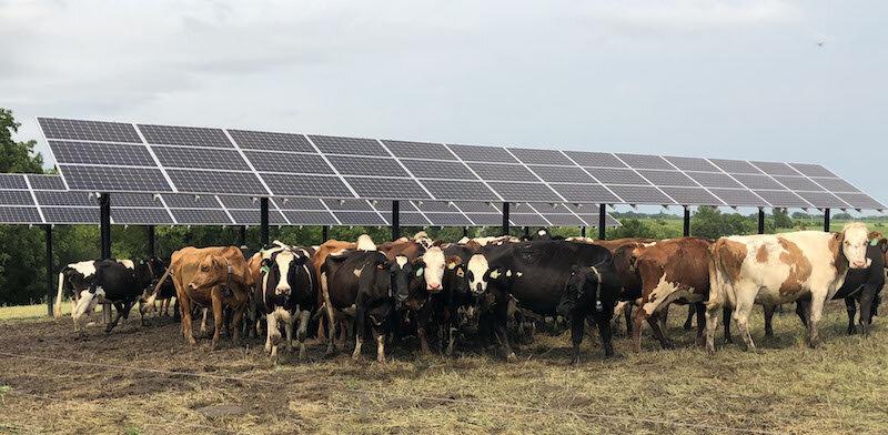 Dairy under solar shading WCROC--Esther Jordan IMG_0051.jpg