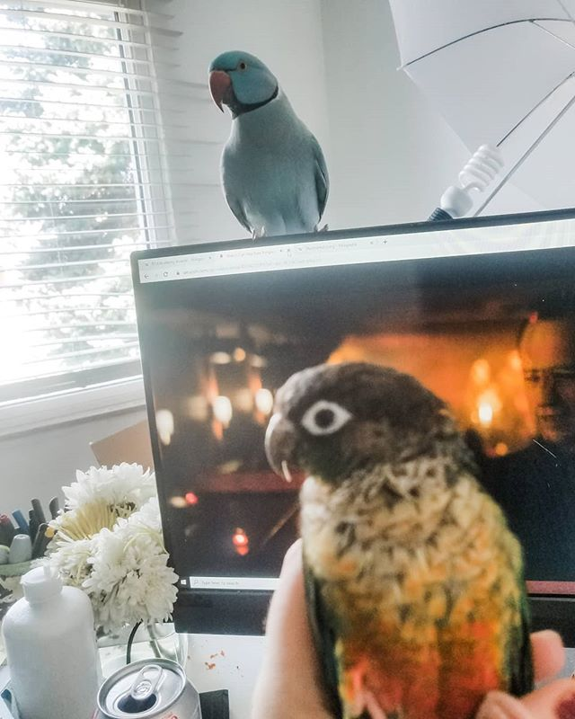 Was trying to get some work done... #birds #parrotsofinstagram #administrativeassistant #goals #work