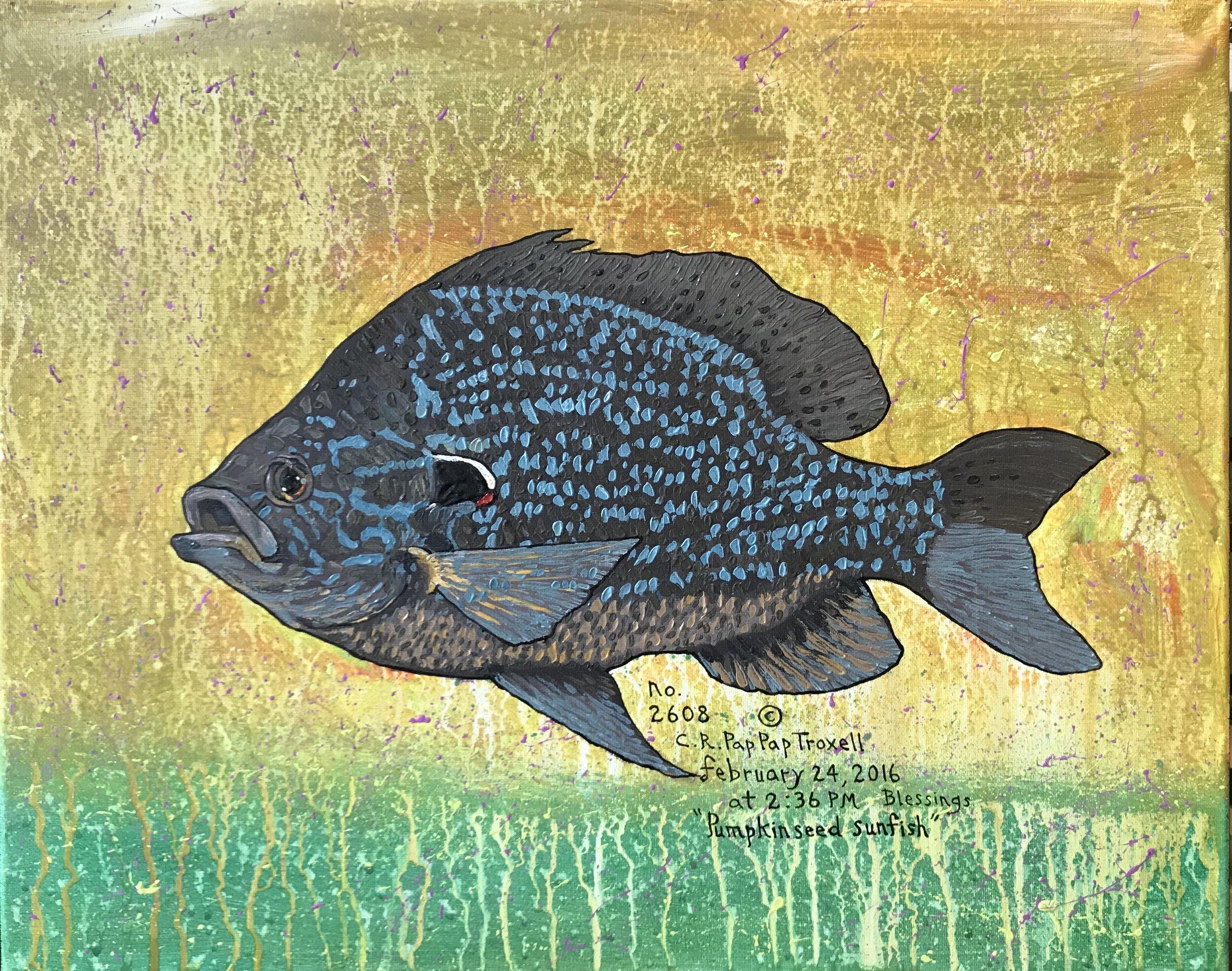 No. 2608 Pumpkin Sunfish.jpg