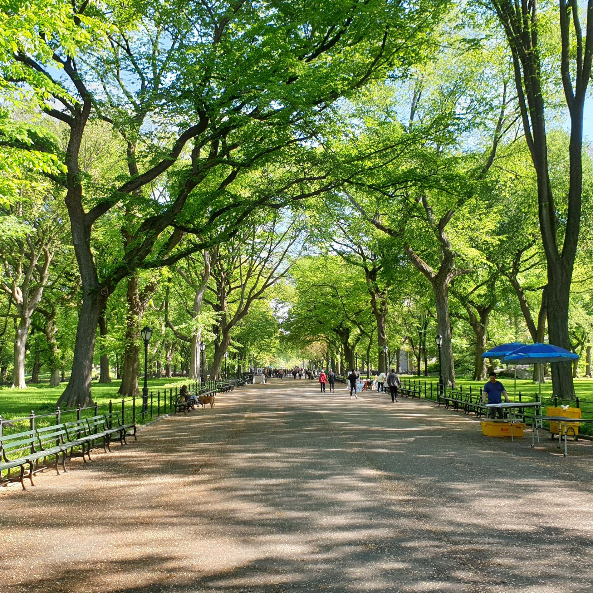 3.1-Central-Park-MAJA-1.jpg