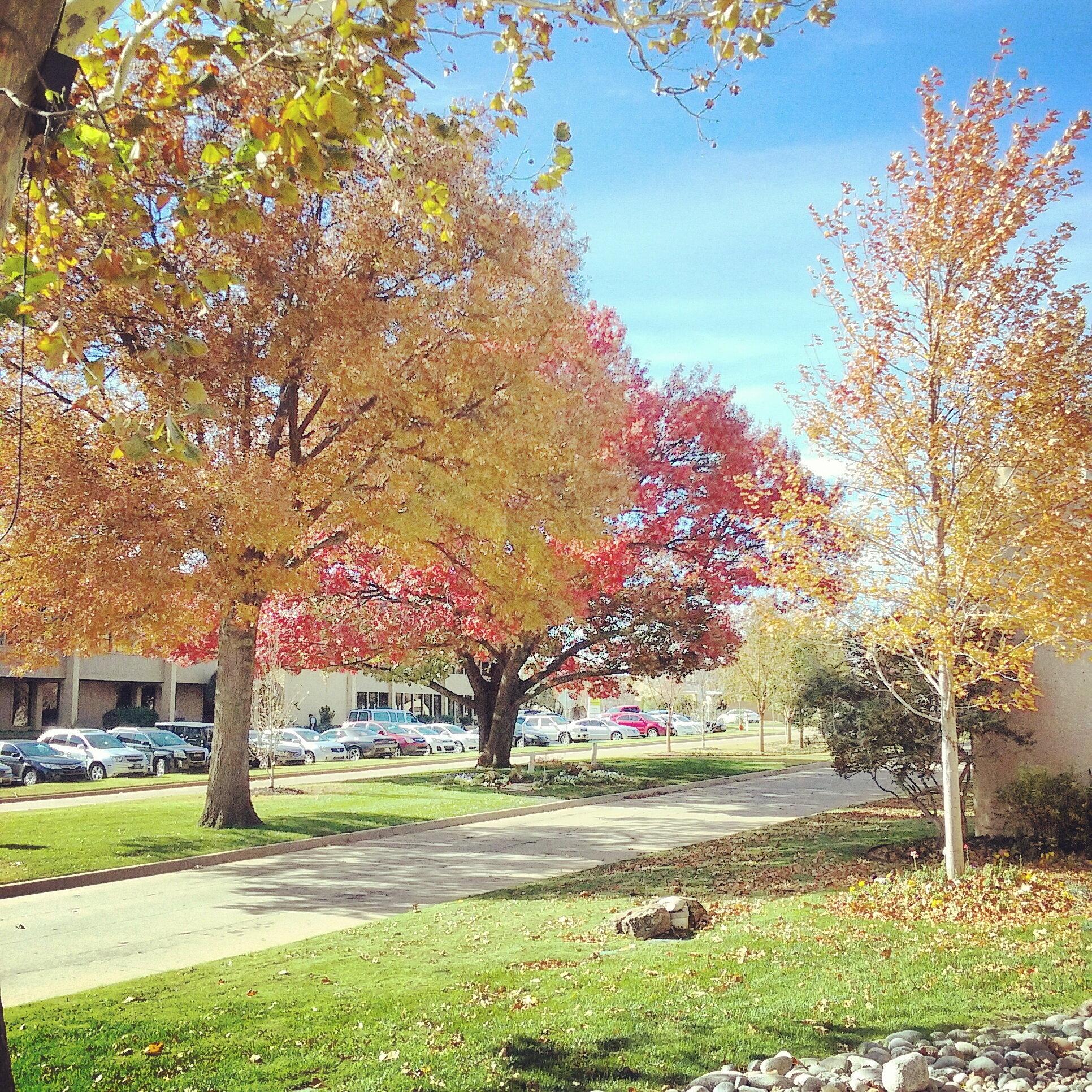 Fall on the medians, 2016.jpg