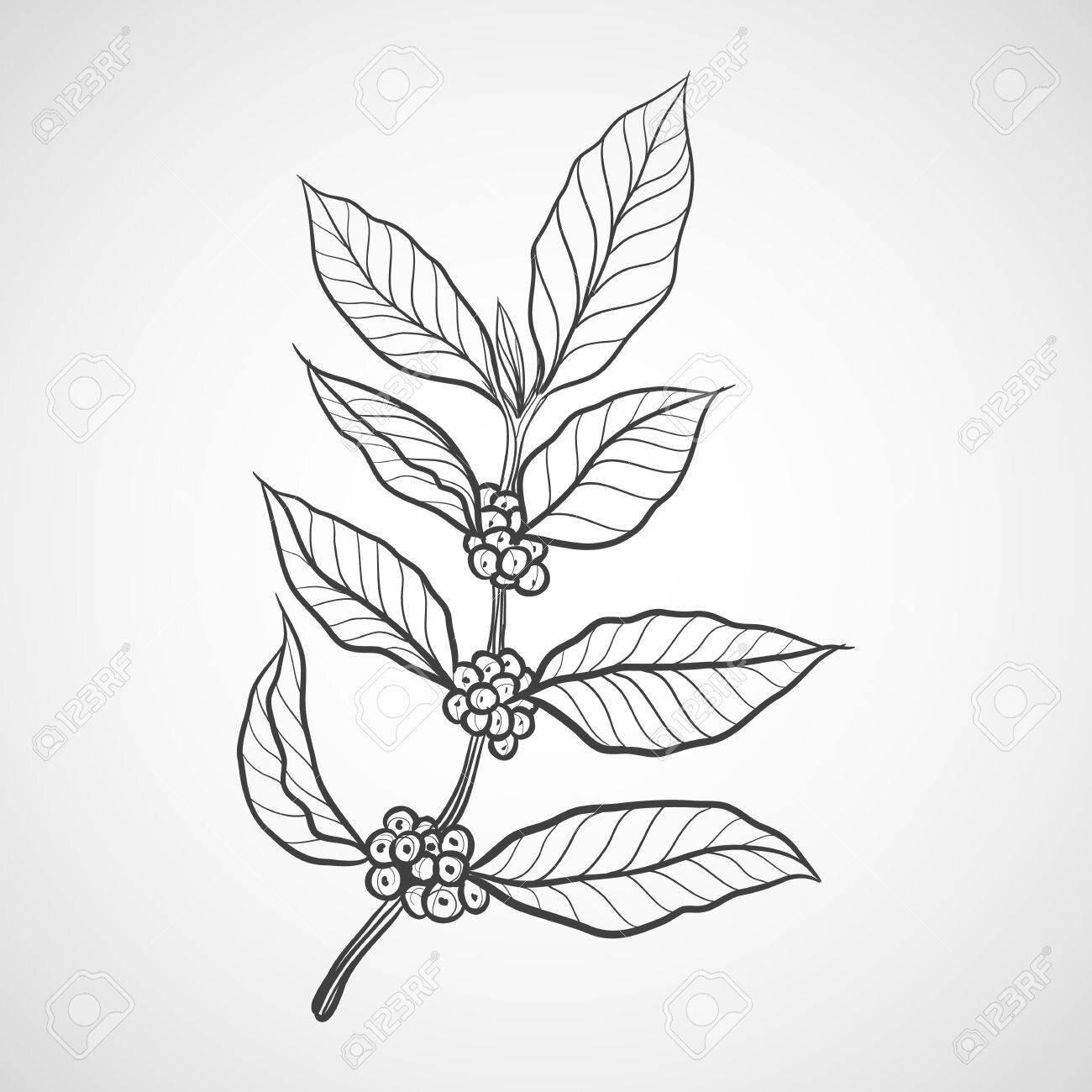 coffee leaf.jpg