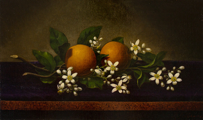 Martin Johnson Heade - Oranges and Orange Blossoms (1883/95) Oil on canvas12 1/8 × 20 7/8U-4661.1996. University of Nebraska–Lincoln, in loving memory of Beatrice D. Rohman by Carl H. and Jane Rohman, through the University of Nebraska Foundation