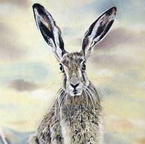 Michelle Hewitt Wildlife Artist