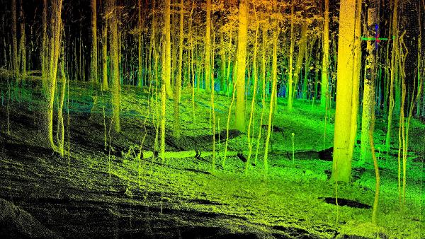 Forest Lidar.jpg