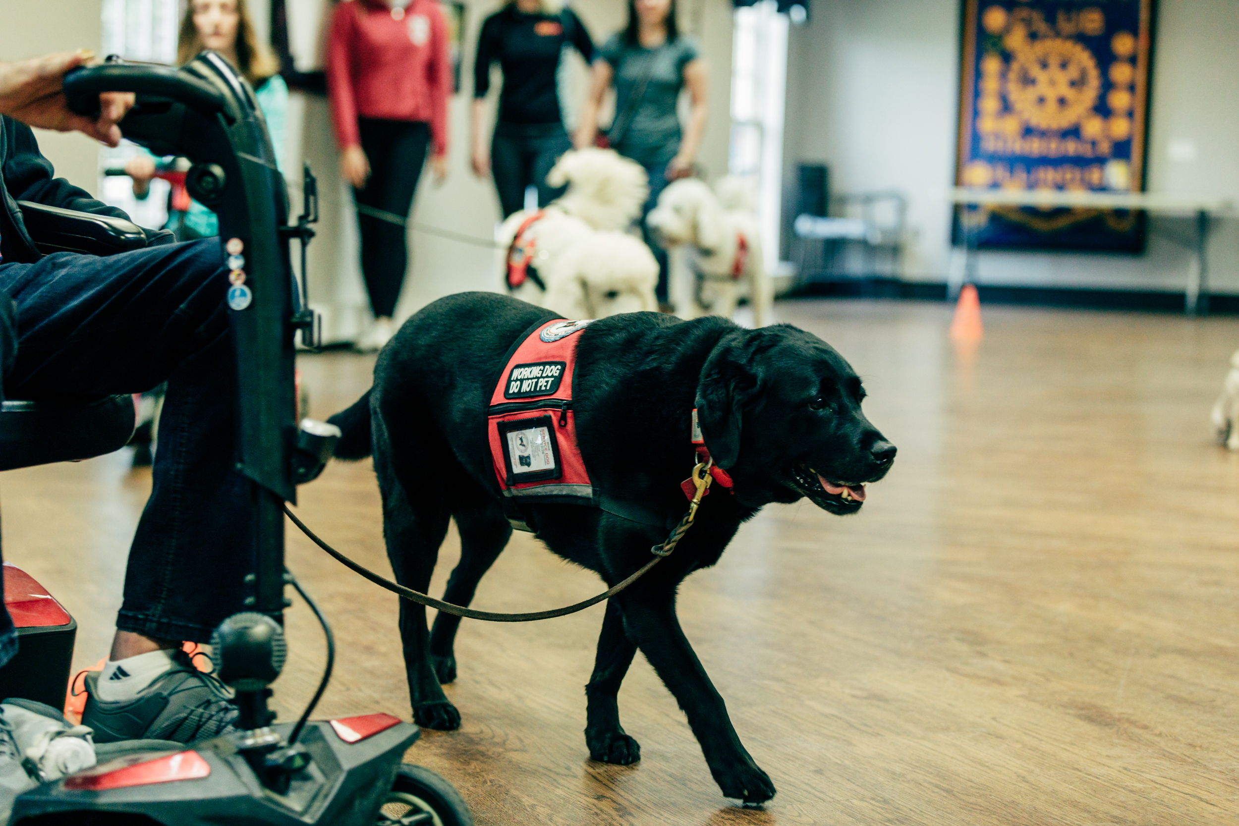 service dogs - Want to learn more about the type of service dogs we work with, as well as service dog etiquette?