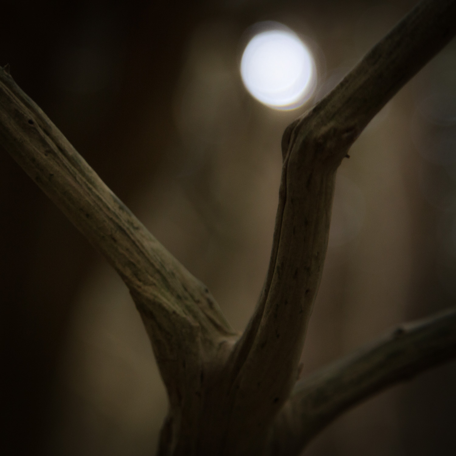 The Moon And The Yew Tree - V