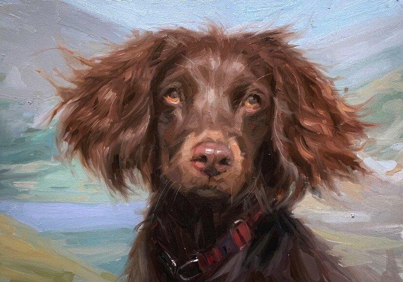 springer spaniel oil painting pet portrait