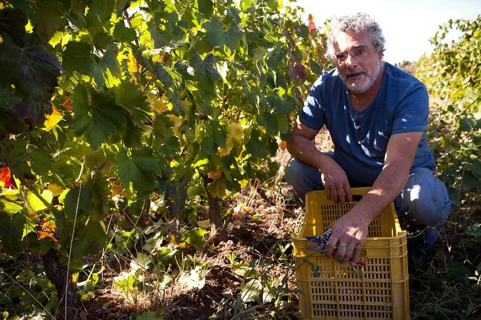 Nicola Bendo, one of our local vine producers!