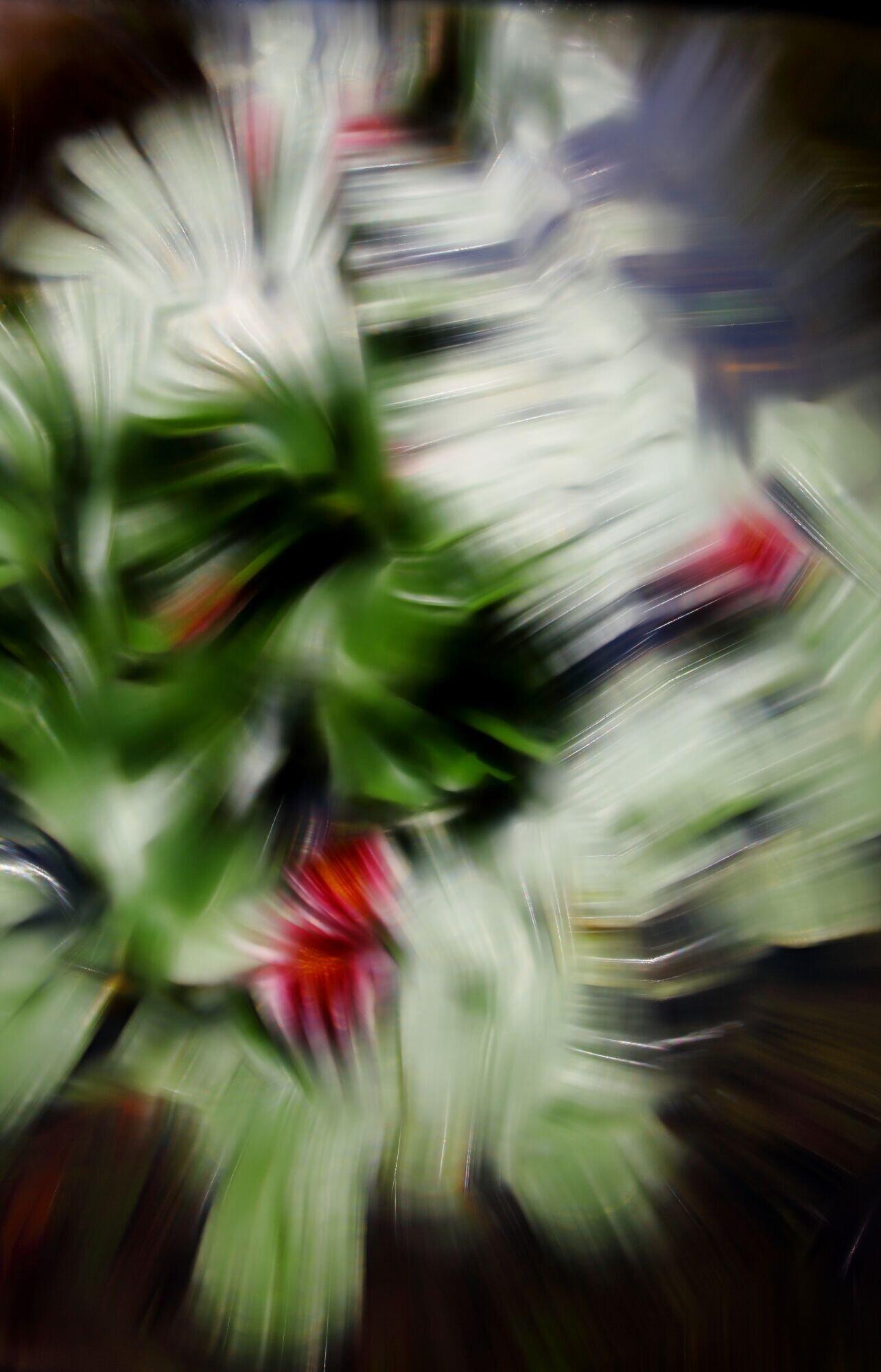 Waterlilies IV, 2012