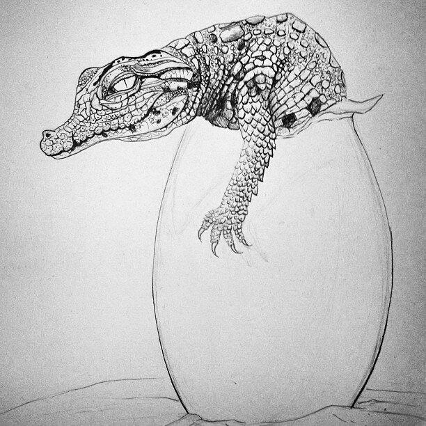 Aligator_Sketch_WIP_LaPalette02.jpg